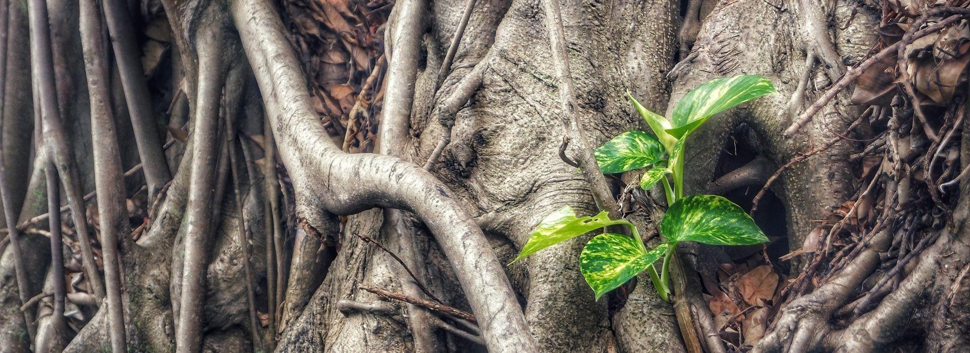 """Rekolekcje """"Bóg ożywia zniszczone korzenie"""""""